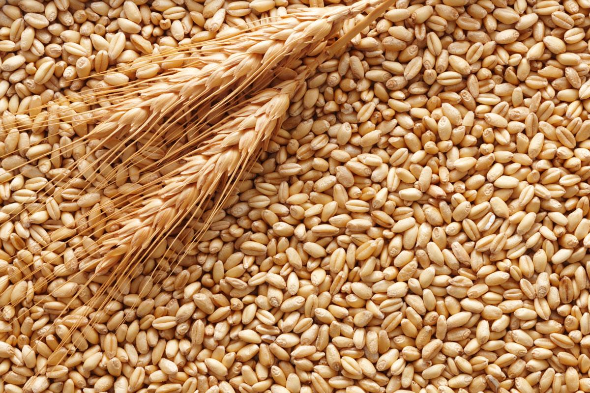 Sensibilita' al glutine: e' davvero tutta colpa del grano?
