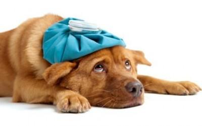 Soffri di mal di testa? Ecco gli alimenti da evitare